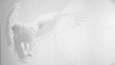 Galactic Snowy Owl Day Light to Black Light