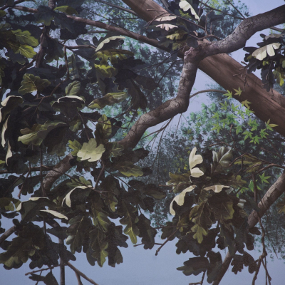 Tree Closeup Natural Light - Mighty Oak Tree Black Light Mural