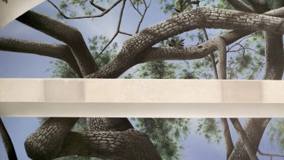 Tree and Sky Closeup Natural Light - Mighty Oak Tree Black Light Mural